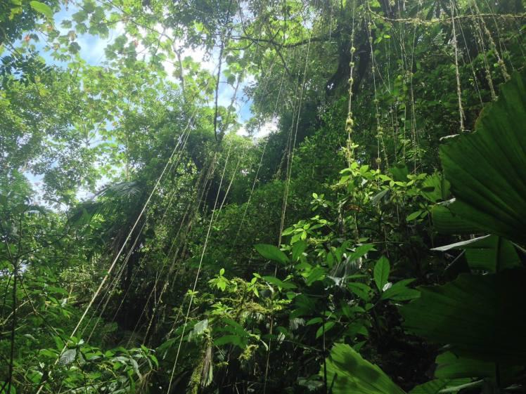 Permatree jugle tree canopy Ecuador
